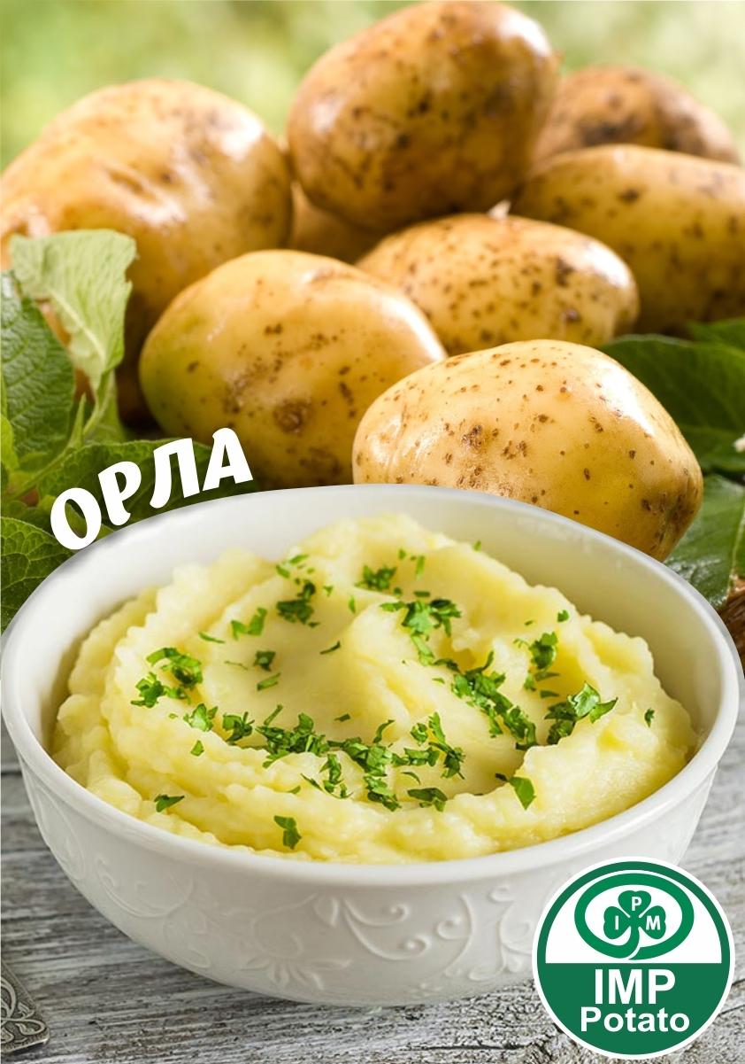Семенной картофель ОРЛА ТМ IMP Potato (Голландия)