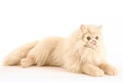 Hansa Мягкая игрушка Персидский кот