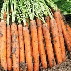 Семена моркови Наполи F1, Bejo, 0,5 гр.