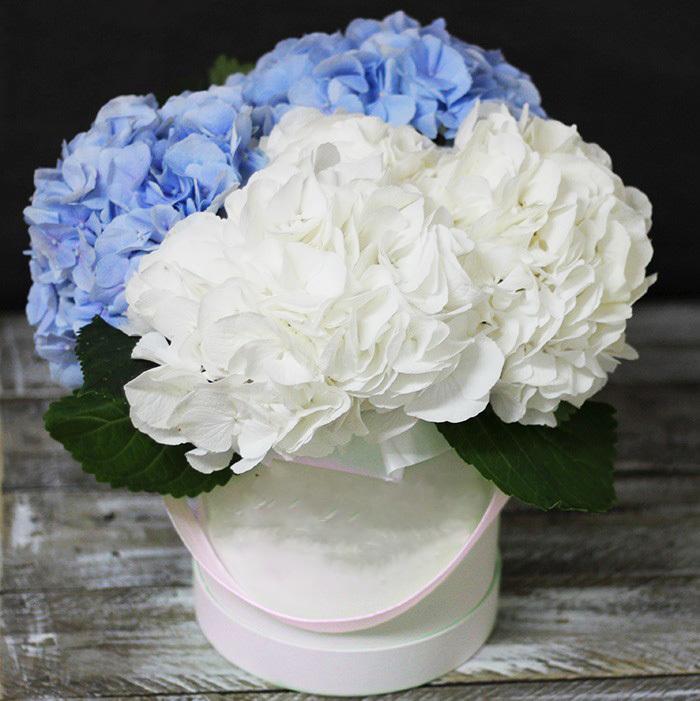 Цветы в шляпной коробке ГОРТЕНЗИЯ 5шт