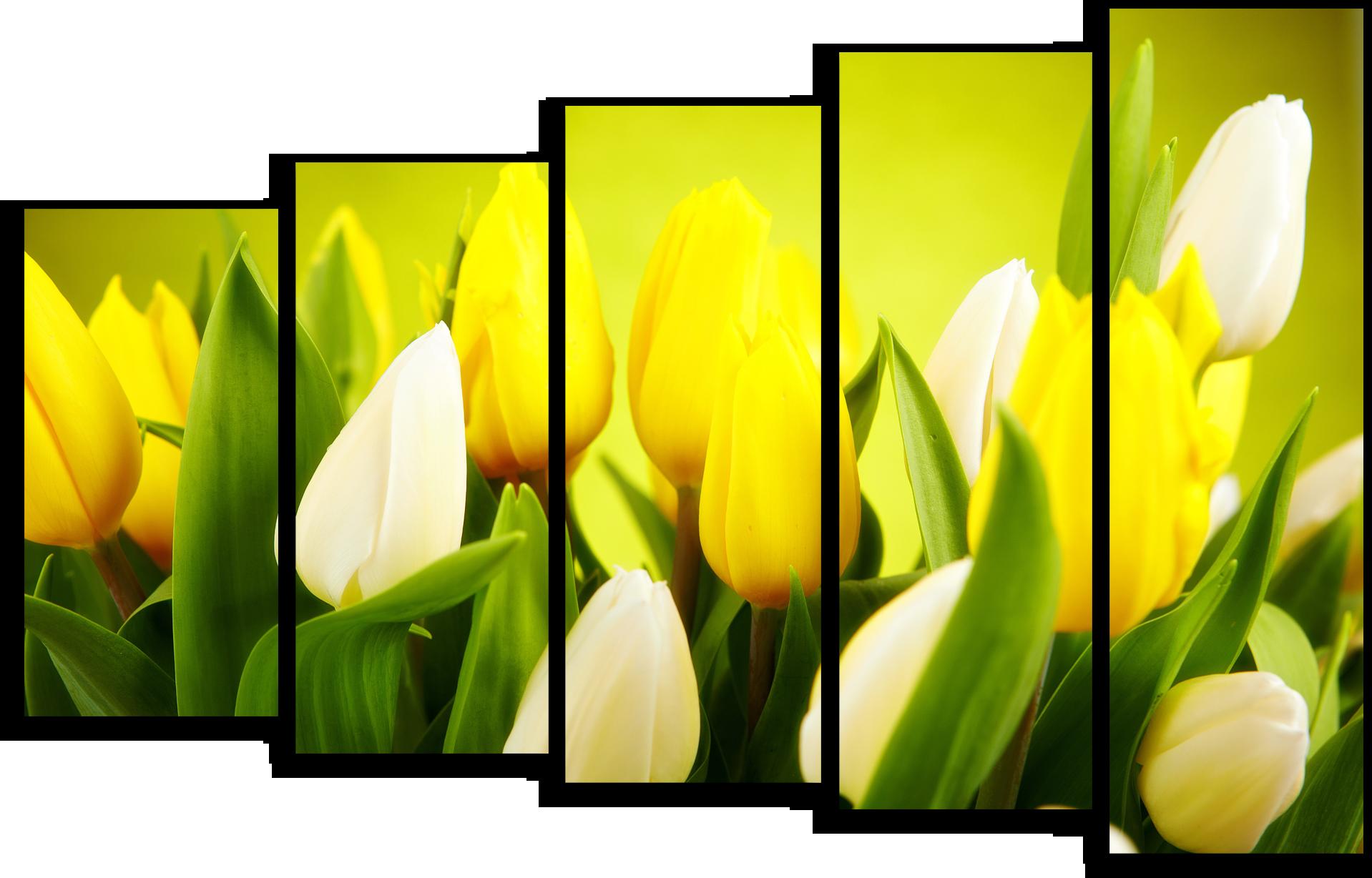 """Цветы Модульная картина """"Тюльпаны солнца"""" М669.png"""