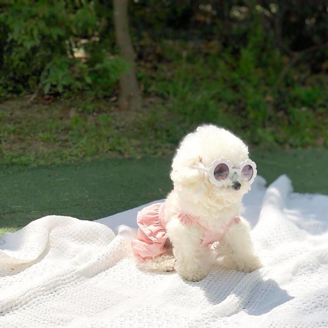 одежда для собак из хлопка