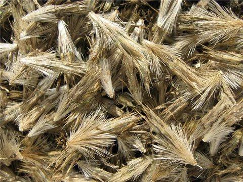 Семена мордовника