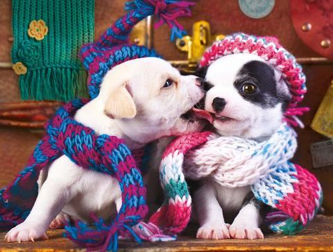 Алмазная Мозаика 40x50 Щенки в зимних шапках и шарфах