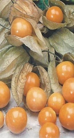 Семена Физалис Королек