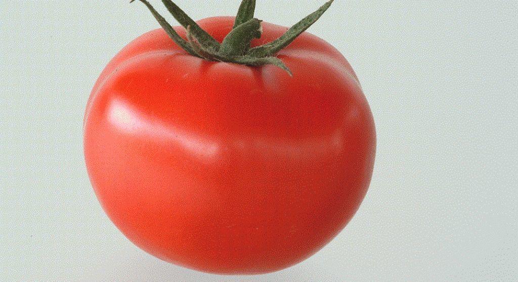 Томат Магнус F1 семена томата полудетерминантного (Seminis / Семинис) Магнус1_семена_овощей_оптом_семена_овощей_оптом.jpg